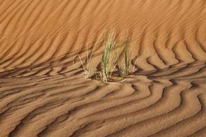 deserto di Dubai con bellissime sandune