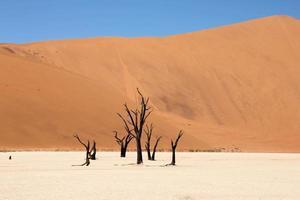alberi di camelthorn in dead vlei foto