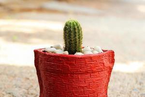 verde cactus foto