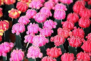 cactus colorati come sfondo. foto