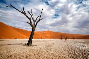 alberi morti in dead vlei naukluft park, namibia foto