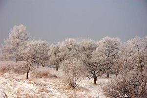giornata gelida nella bassa Slesia foto