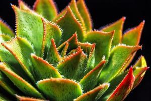 succulento foto
