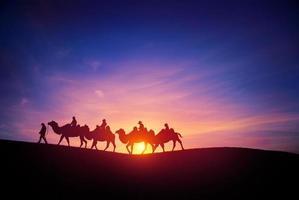 carovane di cammelli foto