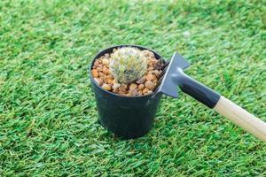 attrezzi da giardinaggio a mano cactus e rastrello foto