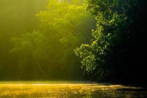 foresta fitta foto