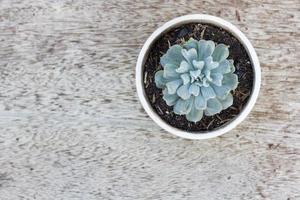 cactus in vaso su legno vecchio