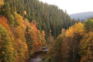 foresta colorata