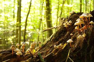 funghi della foresta foto