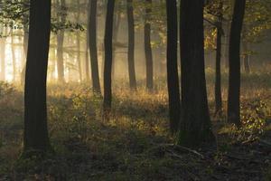 foresta d'autunno foto