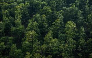 sullo sfondo della foresta