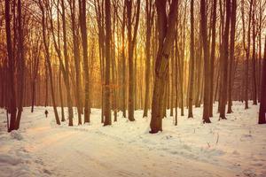 strada forestale foto