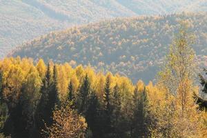 autunno della foresta dei carpazi