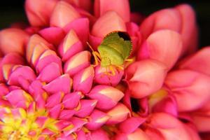 insetto della foresta. emitteri. foto
