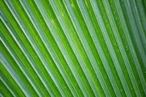 sfondo foresta tropicale foto
