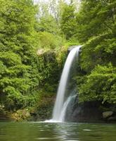 cascata nella foresta foto