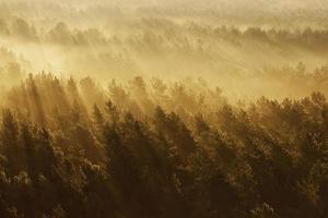 foresta nebbiosa in Bielorussia