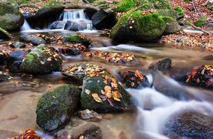 flusso nella foresta profonda foto