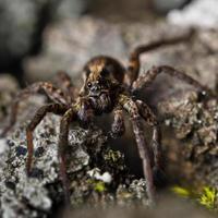 ragno nella foresta