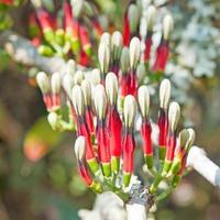 fiori di bosco foto