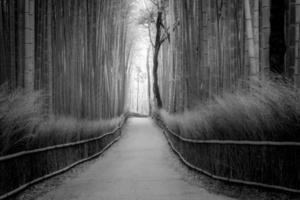 foresta di bambu foto