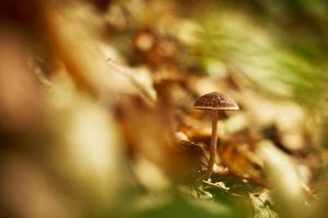 funghi nella foresta di autunno foto