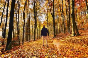 camminando nella foresta di autunno
