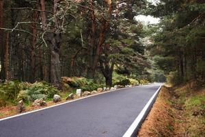 autostrada nella foresta