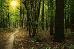foresta con la luce solare