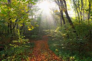 foresta in autunno foto