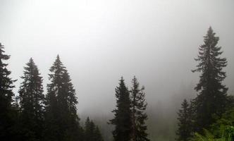 foresta e nebbia