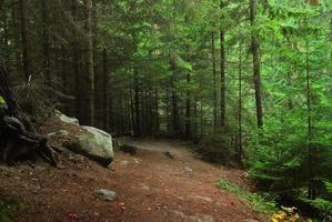 colori autunnali nella foresta