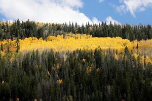 luminosi colori autunnali foresta di pioppi