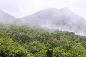 nebbioso nella foresta la mattina.