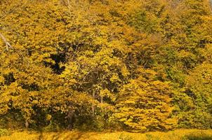 scena di alberi della foresta dorata