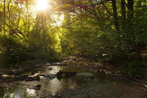flusso della foresta con la luce solare foto