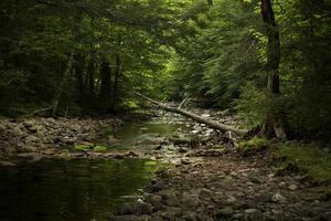 sponda del fiume nel profondo della foresta foto