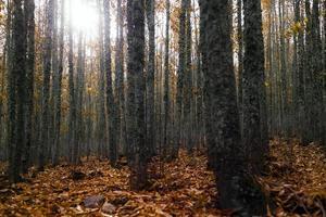 cortecce degli alberi nella foresta foto