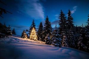 albero di natale nella foresta