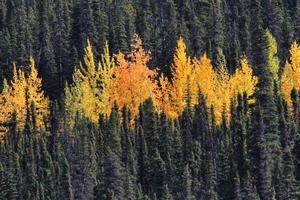 foresta colorata in British Columbia foto
