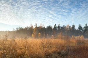 alba nebbiosa nella foresta di autunno