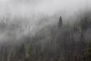 collina nebbiosa con contorno di alberi di pino foto