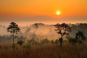 alba sopra la montagna nella foresta foto