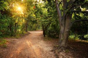 raggi di sole nella foresta magica