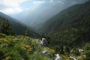 scena della foresta in montagna olimpica-grecia foto
