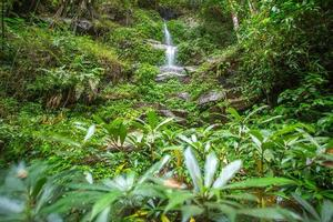 wwaterfall nella foresta tropicale foto