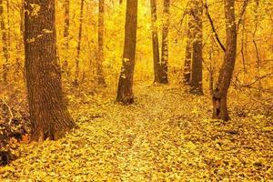 alberi di autunno colorati nella foresta