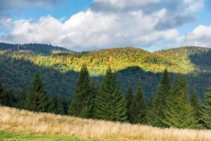 incredibile foresta di montagna all'inizio dell'autunno
