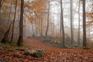 germania, berchtesgadener land, bosco autunnale, nebbia foto