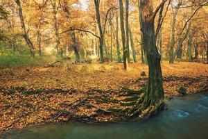 ruscello che scorre sulla foresta di autunno colorato